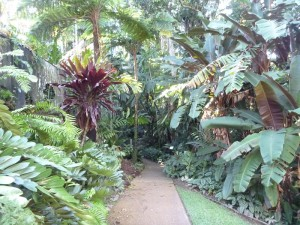 Botanischer Garten in Cairns