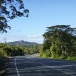 Zurück in tropischen Wäldern