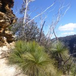 Tropische Vegetation in den Blue Mountains