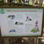 Cassowary - der Helmkasuar - vor ihm ist gewarnt