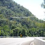 Eine Brücke für das Possum