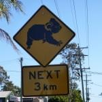 Koalas haben hier Vorfahrt