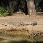 Queensland das Land der Krokodile