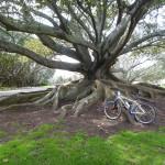 mit dem Rad unterwegs in Auckland