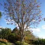 Magnolien im Frühling