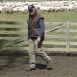 Steve - the sheepwhisper