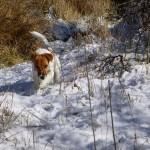 Ellie begleitet mich beim Laufen